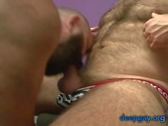 Two Very Hairy Bear Daddies Waste No Time (deepgay)